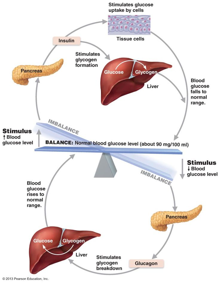 Insulin lowers blood sugar levels by enhancing membrane transport of glucose into body cells.  Glucagon is released by the pancreas in response to low blood glucose levels (primarily) and raises blood glucose levels back to within normal range by release of glucose to the blood by the liver.