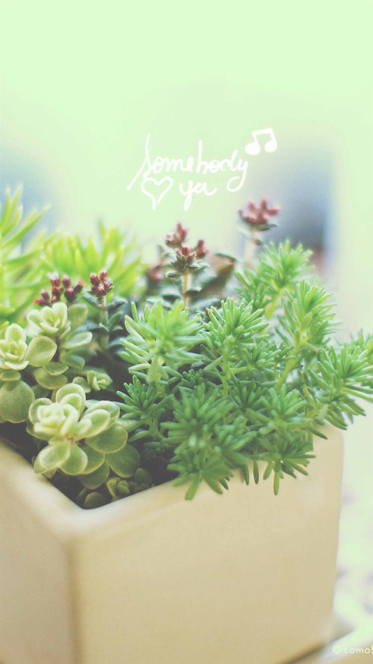 Nature Vitality Aesthetic Fleshy Plant Pot iPhone 6