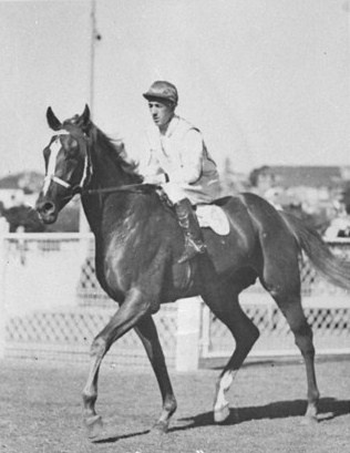 Ajax was a champion Australian bred Thoroughbred racehorse and sire, who won 18 consecutive races.