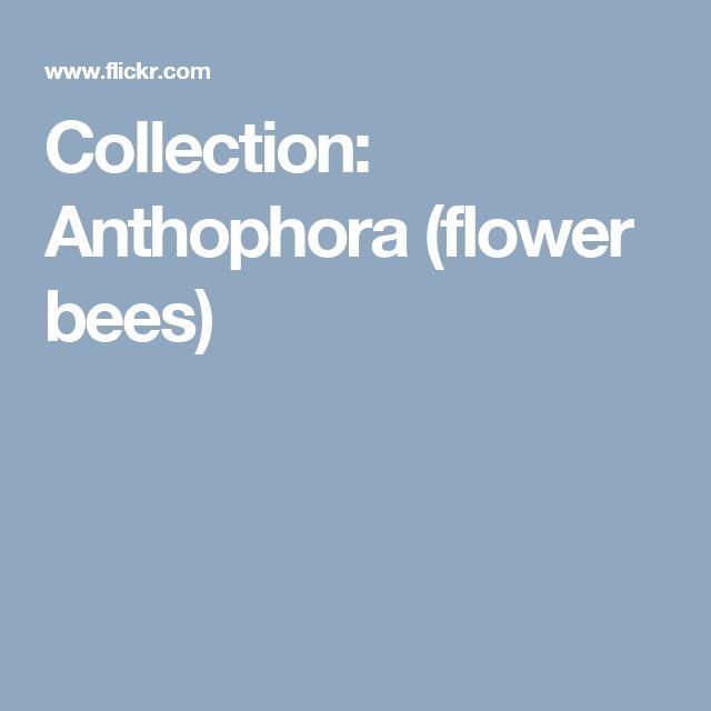 7 besten Pollinator activities Bilder auf Pinterest   DIY Schränke ...