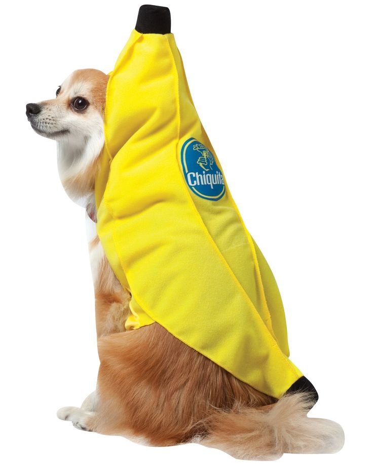 chiquita banana pet costume - Banana Costume Halloween