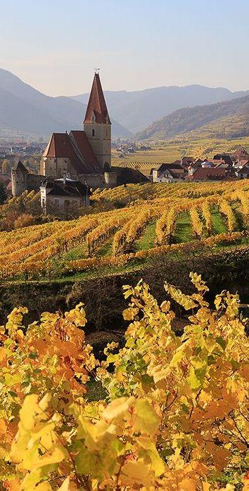 Wachau, Austria by Eui Soon Hwang | Golden vineyards roll toward the Danube River ....