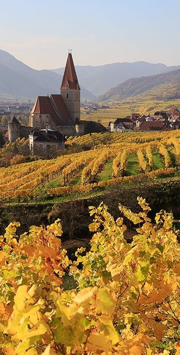 Wachau, Austria by Eui Soon Hwang | Golden vineyards roll toward the Danube River ....