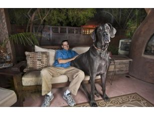 Самая большая собака 1