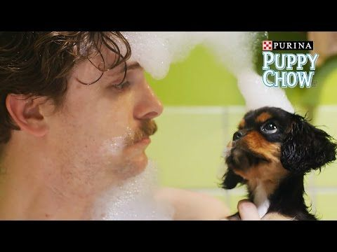 Puppyhood: We Met A Girl // Presented by BuzzFeed & Purina Puppy Chow - YouTube ok this is pretty darn cute