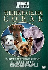 Энциклопедия собак: Бладхаунд, йоркширский терьер, датский дог, ши-тцу, родезийский риджбек