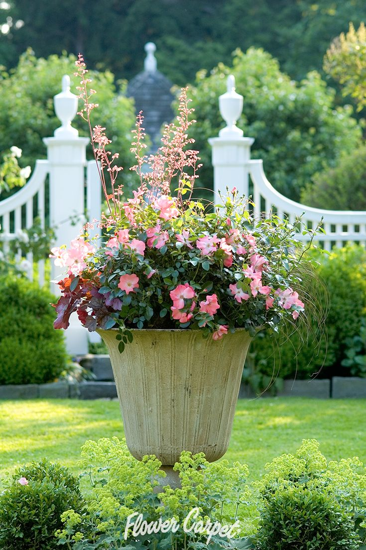 65 best garden designs with roses images on pinterest carpets urn with flower carpet coral roses dhlflorist Image collections