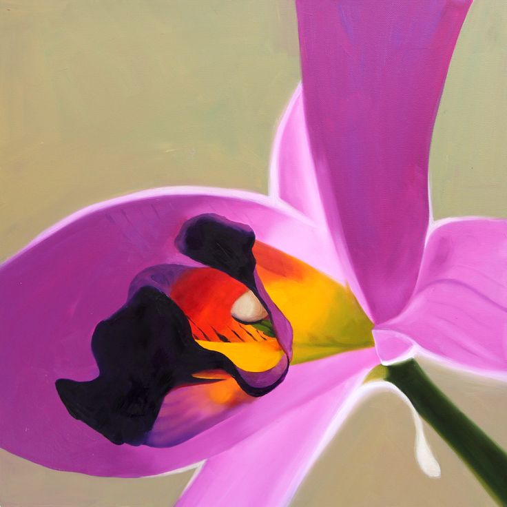 Laelia Ancepts Barkeliana (orchid) 40 x 40 cm Oil on Canvas