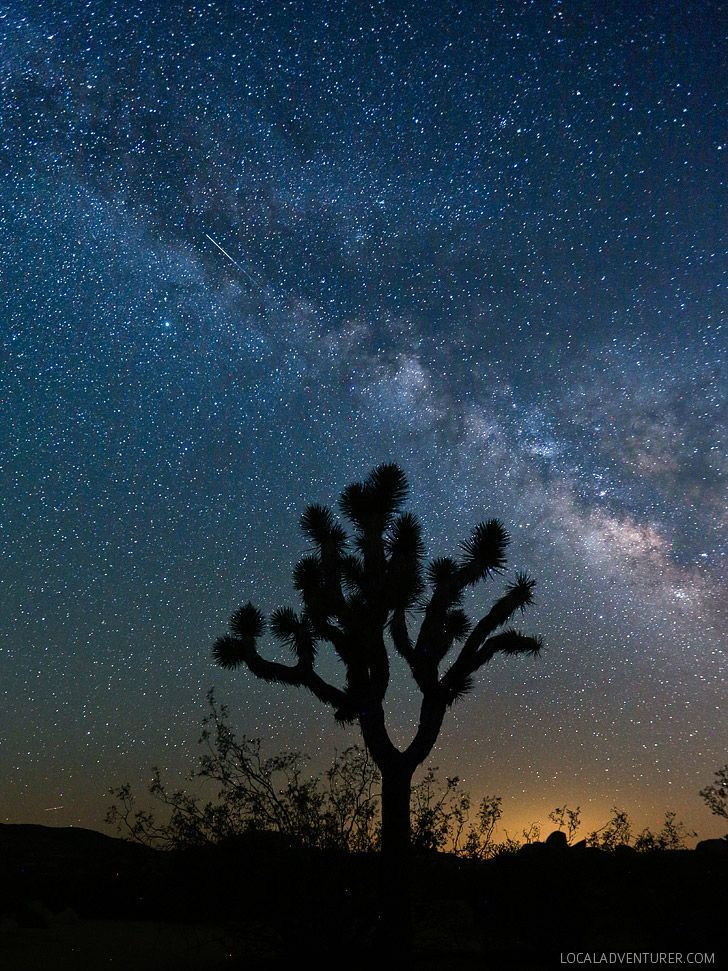 Stargazing at Joshua Tree National Park + 11 Best Things to Do in Joshua Tree // http://localadventurer.com