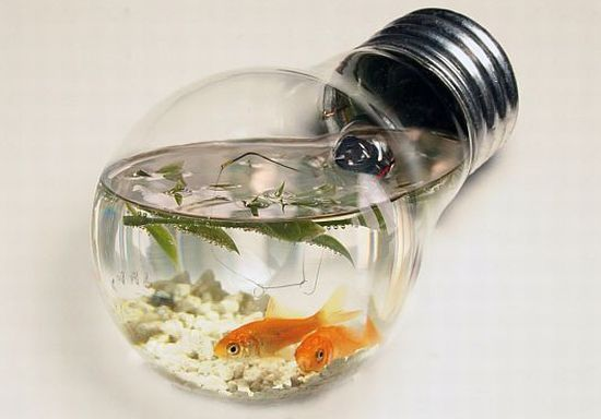 Light bulb aquarium with its amazing look lets your fishes flaunt about their new and unique house. The unusual space will make your marine pal feel posh without you having to blow a good portion of your retirement fund to please high fishiness. Making use of the old bulbs not only helps to utilize the old bulbs but also gives a new designed house to your fishes.
