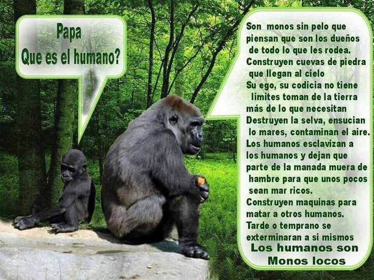 No te conviertas en un mono loco... Mejor convierte al Mundo en algo mucho mejor.