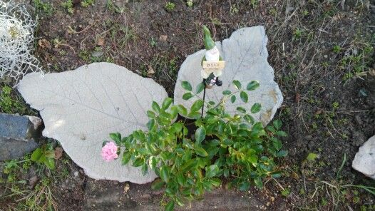 Listy z betonu