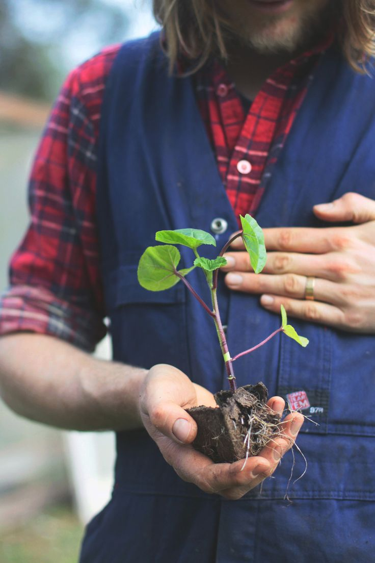 The Slowpoke: GROW YOUR OWN SEEDLINGS // Tips for successful seedlings. #how-to #gardening #organic Photo: Hilary Walker