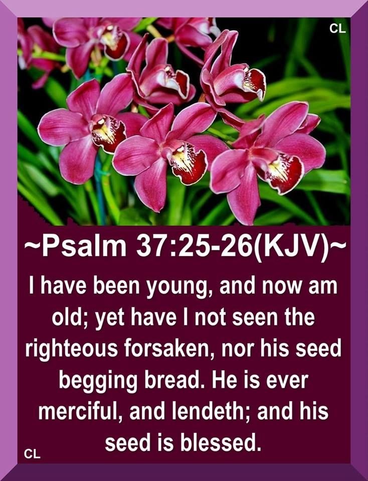 Psalm 37: 25-26 KJV