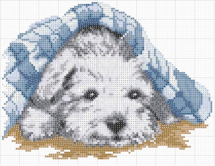 Gallery.ru / Фото #3 - Собака - друг человека! - COBECTb