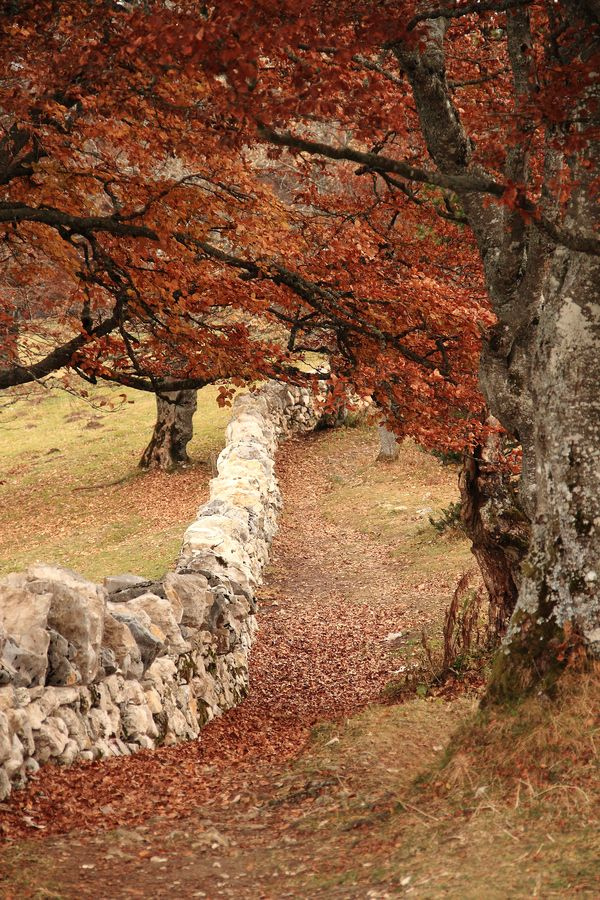 Amazing Stone Fence in Autumn Field.