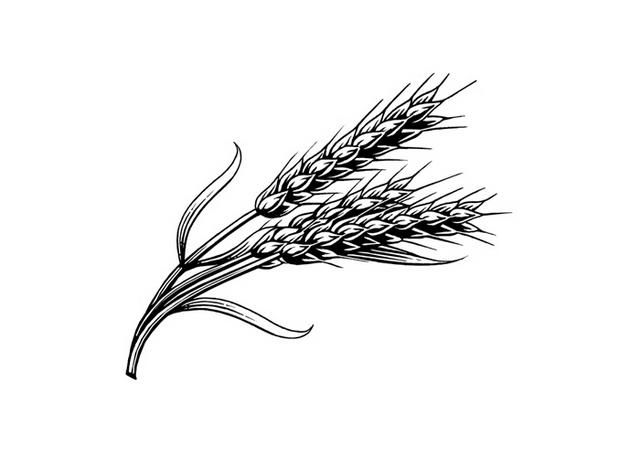 Картинки с пшеницей карандашом, для мамы