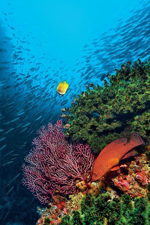 Scuba Diving Top 100: Best Overall Diving | Scuba Diving