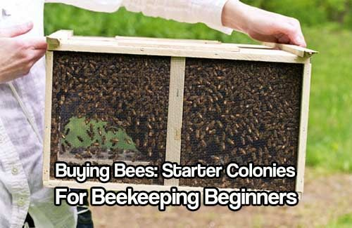 Buying Bees: Starter Colonies for Beekeeping Beginners... Get great bee advice and be sure you are choosing the right colony.