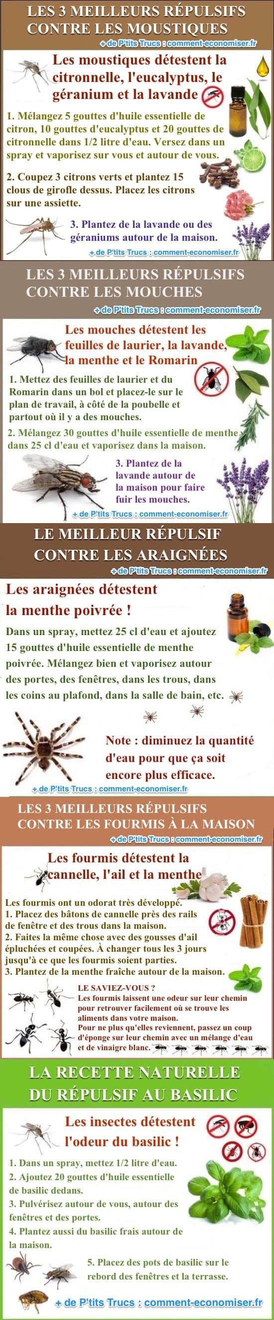 Les 5 Meilleurs Répulsifs Naturels Contre Tous les Insectes.