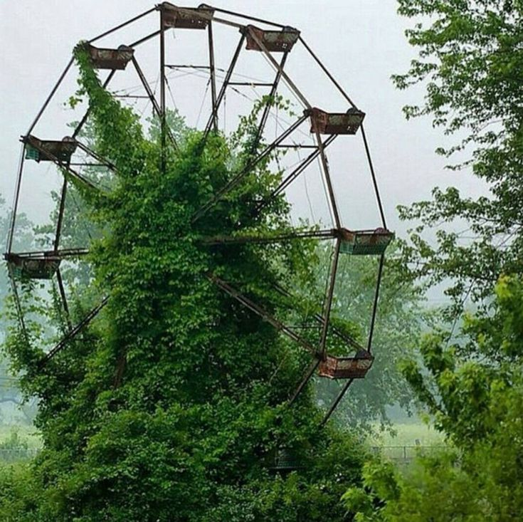 Ruota panoramica, Virginia (Instagram)