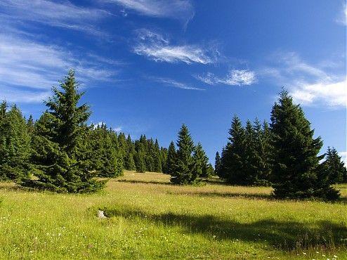 """Niekedy je počasie mocnejšie než my. Začiatkom leta 2009 dva týždne stále pršalo a nám tak zrušilo naplánovanú dovolenku krížom-krážom Tatrami. Naša túžba po pobyte v prírode je ale silná, a tak v prvej polovici júla opierame zrak o mapu, hľadajúc peknú trasu mimo Fatier a Tatier. """"Čo keby sme dali Poľanu a Veporské vrchy?"""" pýtam sa Matúša. Že kľudne. A tak sme vyrazili v ústrety divokým lesom a farebným lúkam kraja, kde líšky dávajú dobrú noc."""