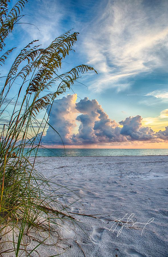 Seaoat sunrise, a summer thunderhead over North Lido Beach, Sarasota, Florida | Kyle Miller on 500px