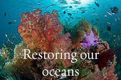 Restauration nos océans