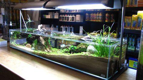 Pin by Ashwath on fish in 2020   Fish tank terrarium ...