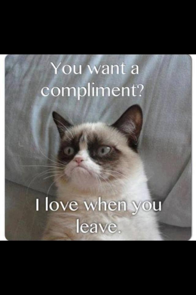 grumpy cat wedding invitations%0A Grumpy Cat  u   d     u   d
