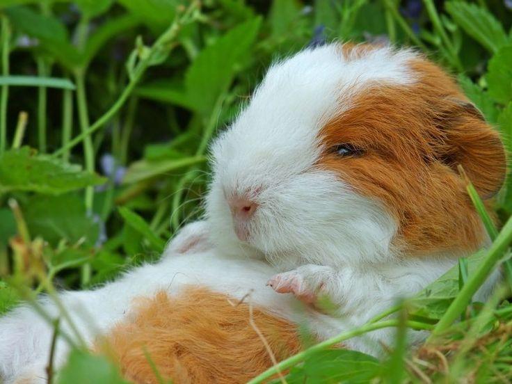 Dating seiten mit hamster
