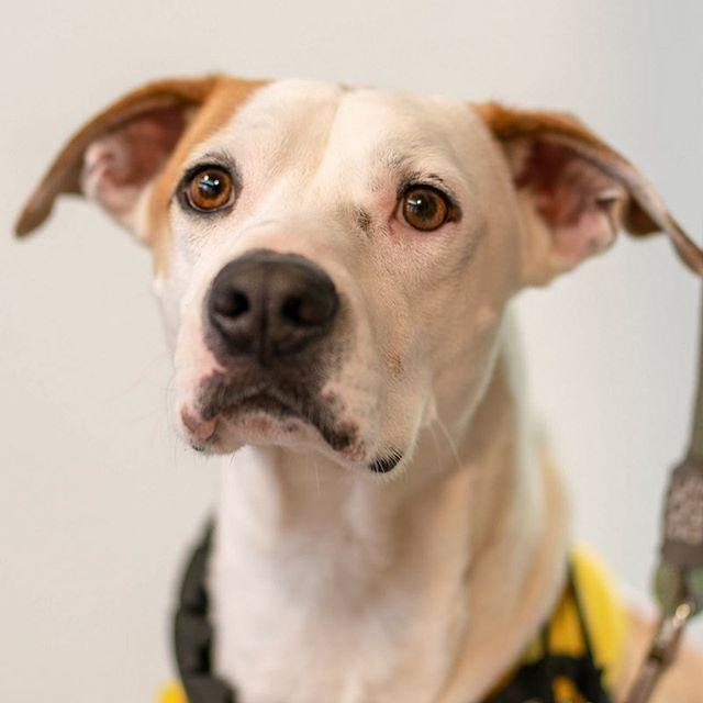 Adoptable Dogs Dog Adoption Pets