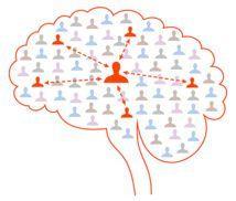 Las neuronas del cerebro están interconectadas como los usuarios de una red social, cada célula nerviosa tiene vínculos con muchas otras, pero los lazos más fuertes se forman entre aquellas pocas células que son más similares entre sí.  Las neuronas forman entre ellas una malla de conexiones mediante las sinapsis (uniones de unas con otras). Cada célula nerviosa se conecta con otras miles. Sin embargo, no todas sus conexiones sinápticas son iguales. La abrumadora mayoría de estas conexiones…