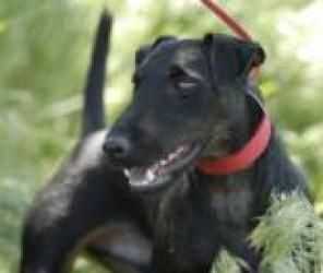Terrier dogs, Adoption and Terriers on Pinterest Lakeland Terrier Rescue Texas