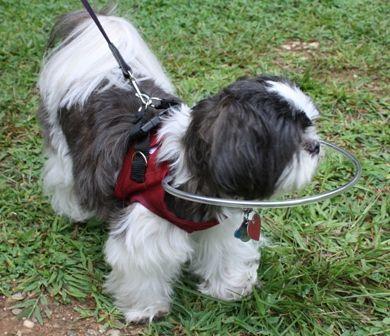 19 Best Images About Dog Blind On Pinterest Vests