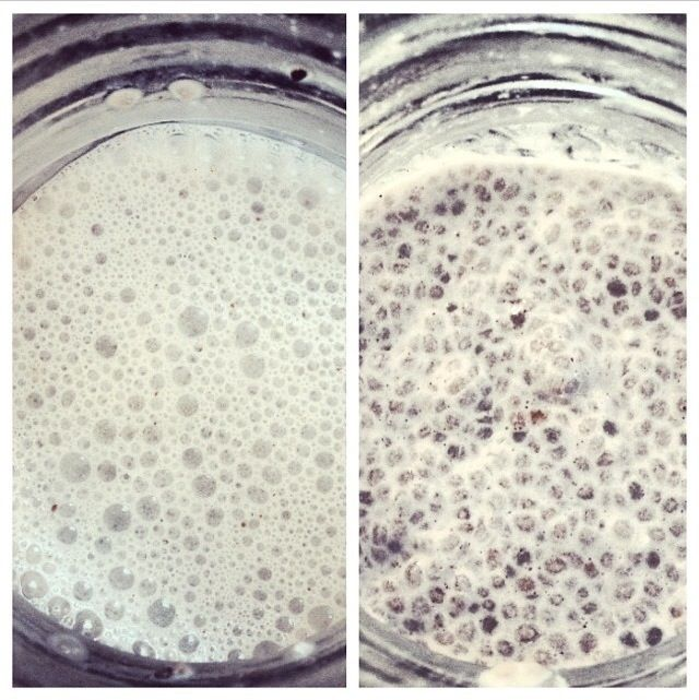My chia seed pudding recipes