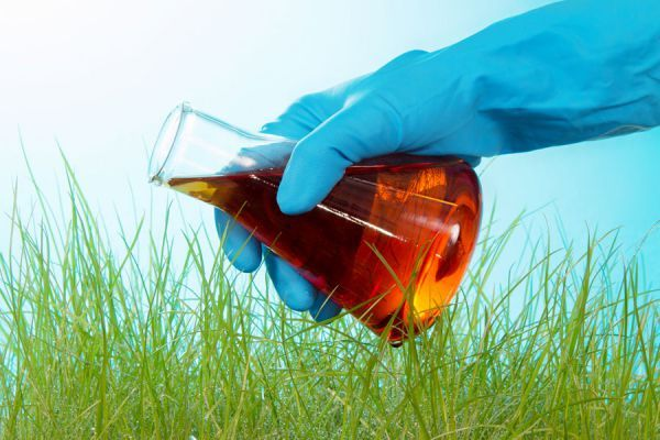 Como sabemos, en la huerta orgánica no se puede usar ningún tipo de producto insecticida para alejar las plagas. Por eso te indicamos aquí soluciones naturales para combatirlos