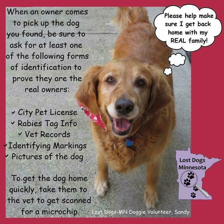 Make Sure That The Dog You Found Goes Home With The Right Family