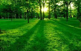 paisajes verdes - Buscar con Google