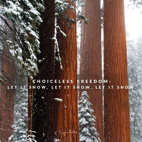 «Свобода, в которой нет выбора: Пусть идет снег! Пусть идет снег! Пусть идет снег!» ~ Байрон Кейти    (примечание: «Пусть идет снет…» — «Let It Snow! Let It Snow! Let It Snow!» — одна из самых известных рождественских песен на английском языке. Написана в очень знойный июльский день 1945 года поэтом Сэмми Каном и композитором Жюлем Стайном и за годы своего существования была исполнена огромным количеством музыкантов. Известно не менее 20 её перепевок. —-> из википедии.
