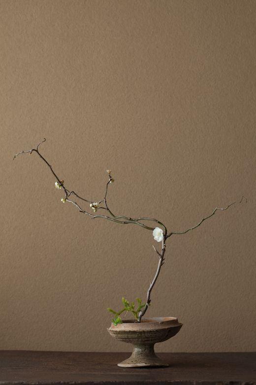 2012年2月12日(日) 今年は辰年。この枝のように躍動してほしい。 花=雲龍梅(ウンリュウバイ)、日蔭蔓(ヒカゲノカズラ) 器=須恵器高杯(古墳時代,300~500 AD.)Toshiro Kawase