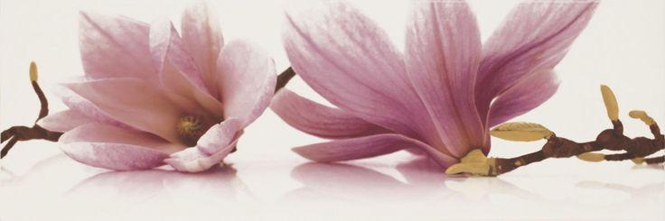 Decor faianta flori mov Abrila inserto Flower A Paradyz  Cu acest model de decor faianta flori mov Abrila inserto Flower A Paradyz umpleti interiorul bucatariei cu amintirile cele mai frumoase din calatoriile dumneavoastra.  Într-un singur loc poți fi răsfățat de flora unică, în altul prin modernitatea si stilul cosmopolit al orașului. Toate aceste le puteti gasi in noua colectie de faianta si gresie pentru bucatarie Abrila / Purio. #faianta #faiantaflorimov #faiantaflori