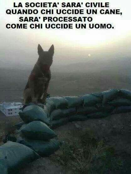 e non solo il cane !!!