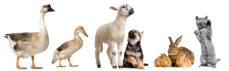 Vlees eters zoals de hond en de kat, zouden we deze huisdieren vegetariër of veganist kunnen laten worden? Hoe ver kunnen we gaan? Wat denk jij?