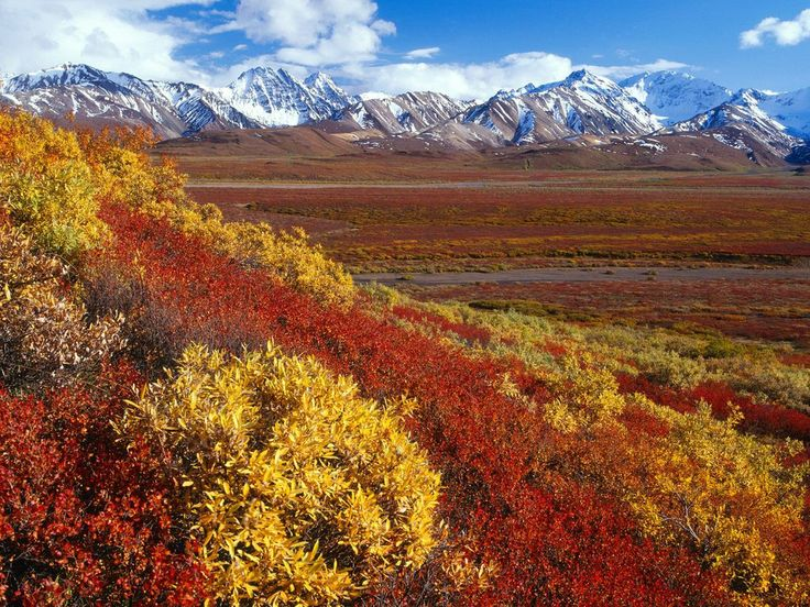 Nice Amazing shot of Denali National Park with the mountains lining the background [1600 x 1200]