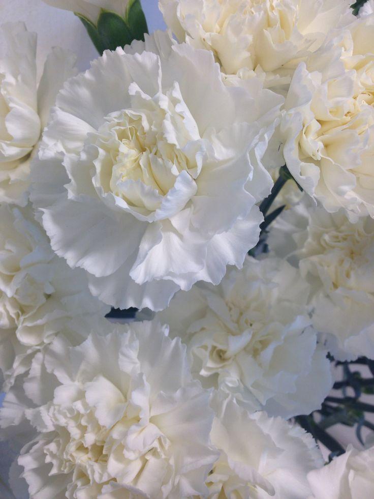 Hvit nellik - Dianthus