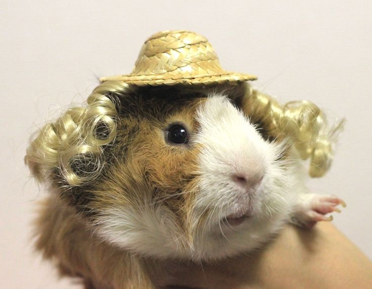 Animals Wearing Wigs A straw hat and blonde wig for