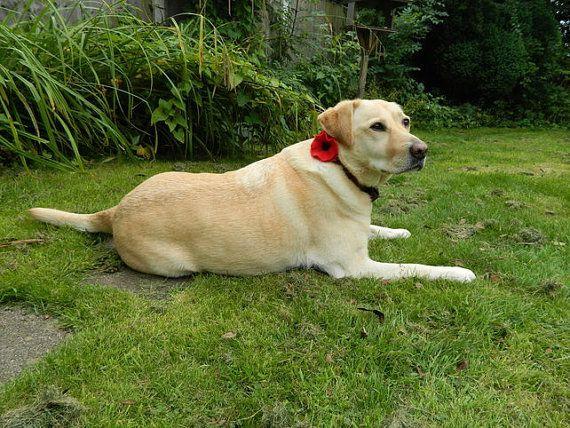 Collier chien rouge coquelicot pour animaux de par Pennyjanedesigns