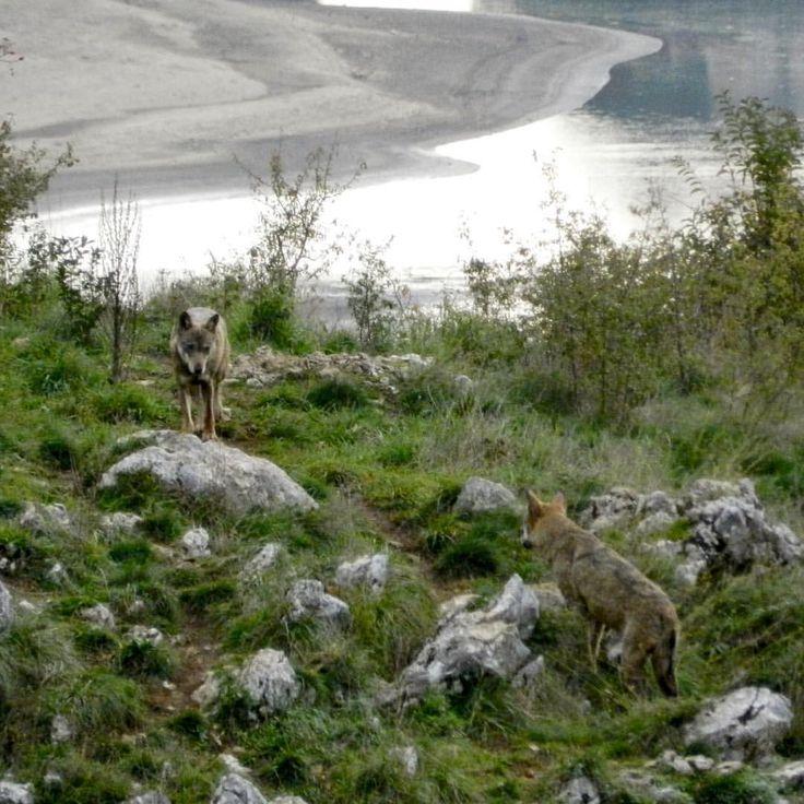 le nostre montagne..il Parco Nazionale d'Abruzzo Lazio e Molise... i nostri animali...i camosci,il cervo , il lupo appenninico e l'orso bruno marsicano....