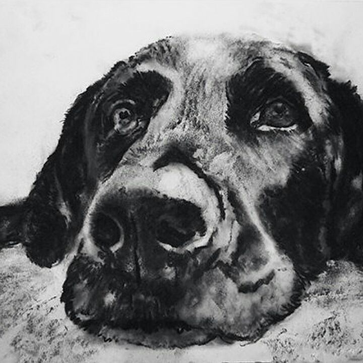 871 Best Images About Drawings On Pinterest | Realistic Pencil Drawings Pencil Drawings And How ...
